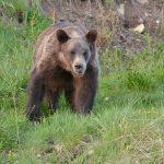 National Park Tour - Bear